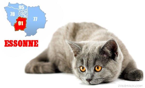 Site dadoption pour chat
